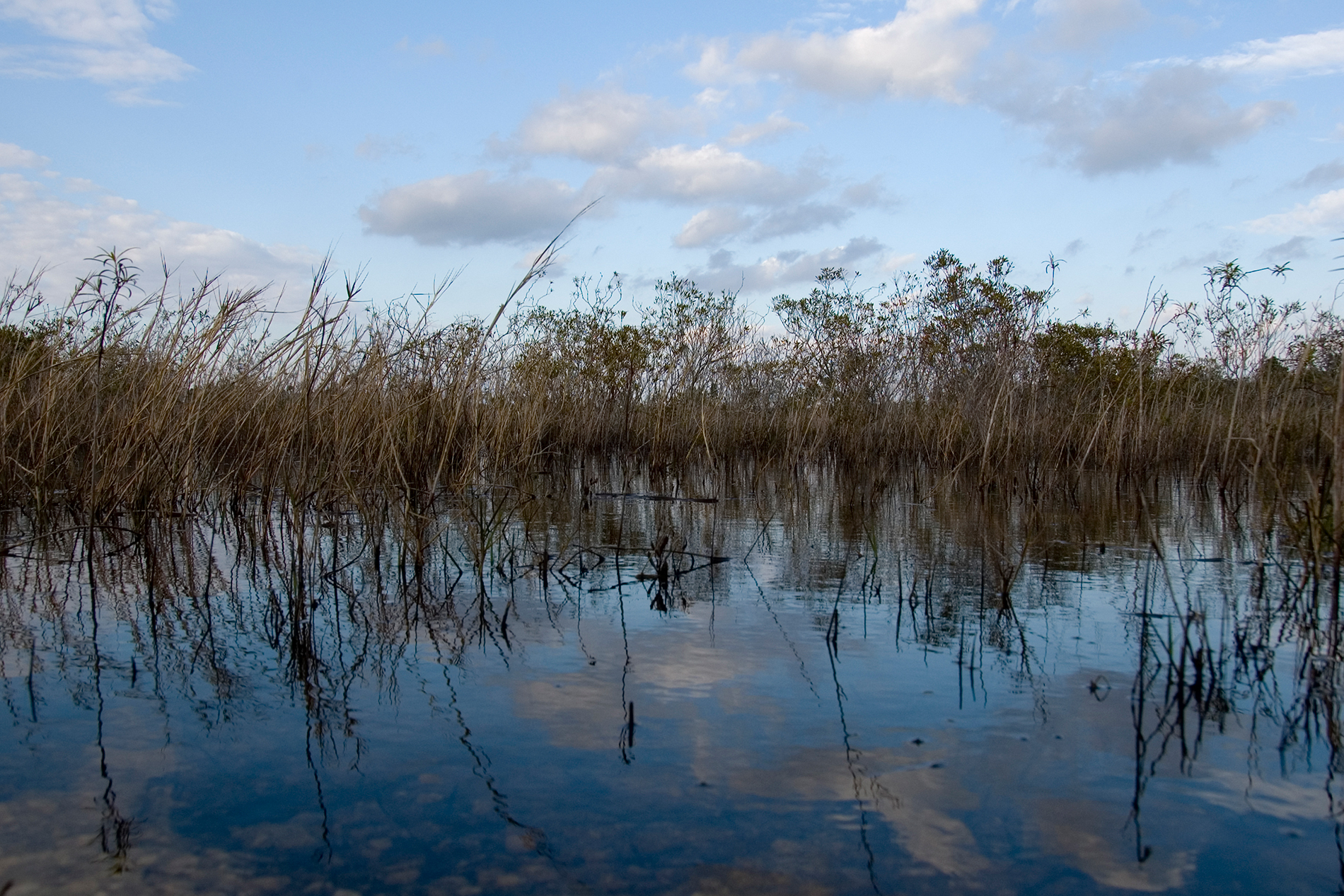 Tears for the Magnificent and Shrinking Everglades